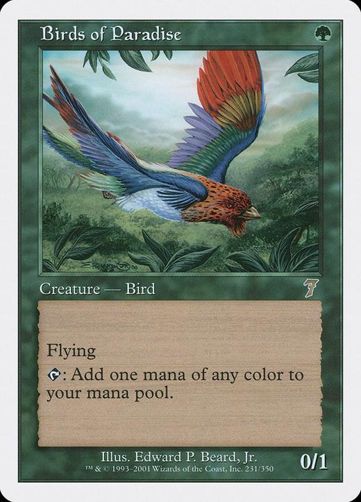 Birds of Paradise image