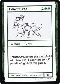 Patient Turtle image