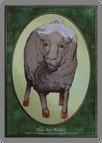 Sheep Token image