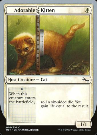 Adorable Kitten image