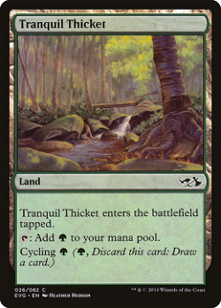 Tranquil Thicket image