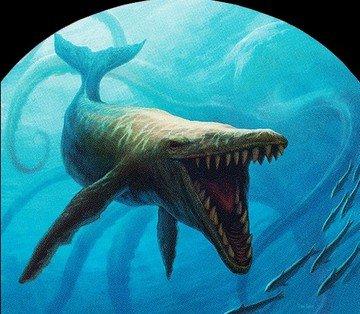 whale token