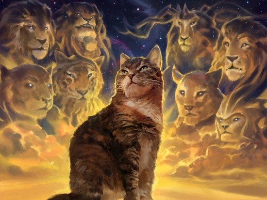 The legendary cats of Nine Lives